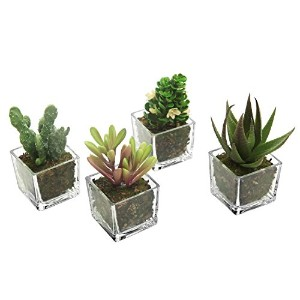 Set of 4 Mini Assorted cube-shaped人工合成多肉植物withクリアガラスポット