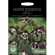 【輸入種子】Johnsons SeedsWorld Botanics CollectionAquilegia vulgaris William Guinnessアクレイジア(オダマキ)・ウイリアム...