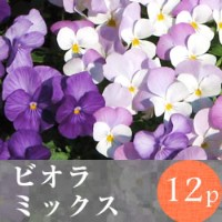 (予約)◎◎ビオラ 花苗 12ポットミックス