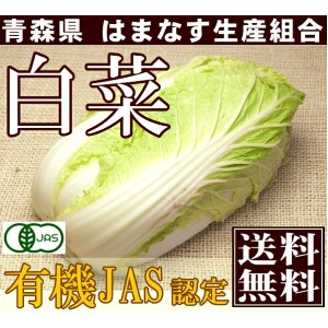 白菜 3〜5玉 約4kg(青森県 はまなす生産組合)有機JAS無農薬野菜・送料無料・産地直送
