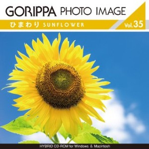GORIPPA PHOTO IMAGE vol.35 「ひまわり」