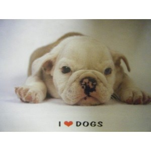 Dog - I Love Dogs Poster - 61x86cm
