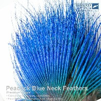 Peacock Blue Neck Feather ピーコック ブルーネック EX