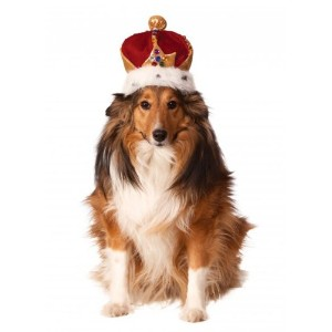 Rubies Costume Company King's Crown Pet Costume Accessory, Small/Medium by Rubie's Costume Co
