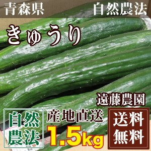 きゅうり 1.5kg(約10-15本)(青森県 遠藤農園)自然農法無農薬野菜・送料無料・産地直送