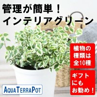 ●st【観葉】アクアテラポットベーシック10.5全10種【ギフト】