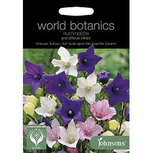 【輸入種子】 Johnsons Seeds World Botanics Collection Platycodon Grandiflora Mixed プラティコドン(桔梗)・グランディフローラ...