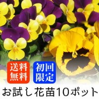 (予約)【初回限定 送料無料】お試し ビオラ OR パンジー 花苗 10ポットミックス