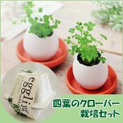 【20%off】四葉のクローバー栽培セット(プチギフト/植物/クローバー/エッグリング) 四つ葉のクローバー 栽培セット クローバー 観葉植物 プレゼント ギフト 結婚式 二次会 景品 観葉 植物...