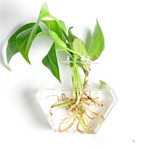SHINA 1個 壁掛け 六角形 ガラス 花瓶 水栽培ポット 観葉植物 水耕栽培植物 ホームデコレーション