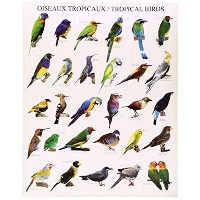 ポスター Tropical Birds KE-117