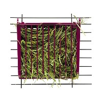 Super Pet Hay Buffet with Snap-Lock Lid Stain Odor Resistant Plastic Guinea Pigs