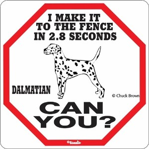 I MAKE IT TO THE FENCE IN 2.8 SECONDS DALMATIAN CAN YOU?サインボード:ダルメシアン [並行輸入品]