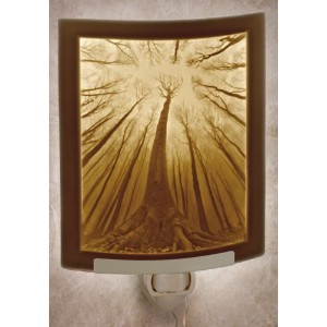 Forest of Dreams – Curved磁器Lithophane Nightlight