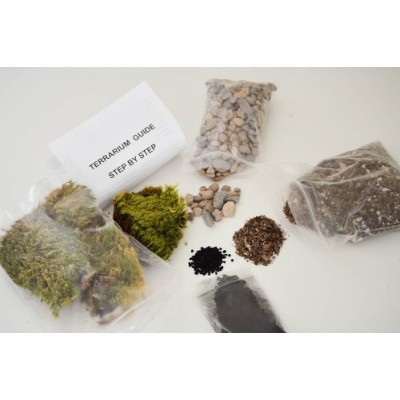 9GreenBox - Terrarium/Fairy Garden Kit - Create Your Own Living Terrarium or Fairy Garden by...