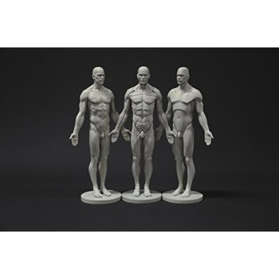 Male Anatomy Figure Collection: Planar, Ecorche and Skin - Anatomical Reference for Artists...