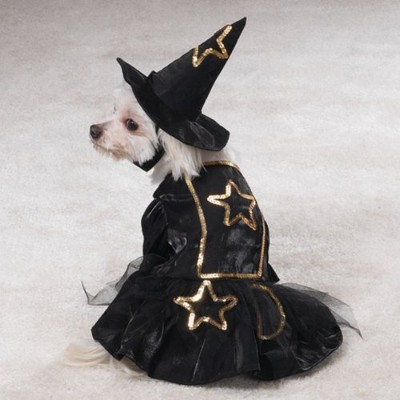 Casual Canine Black & Gold, Sequins & Lace Lil Witch Halloween Dog Costume with Hat X-Small by...