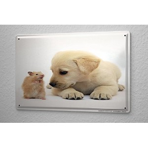Tin Sign ブリキ看板 Breed Golden Retriever puppy Hamster