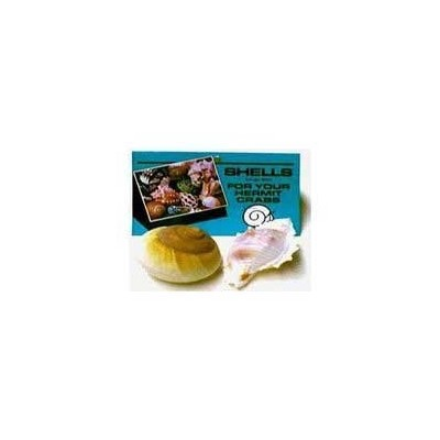 Shells for Hermit Crabs - Large - 2 pk by Florida Marine Research
