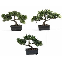 Nearly Natural 4121 Bonsai Decorative Silk Plant Collection, Plastic, 12-Inch, Green [並行輸入品]
