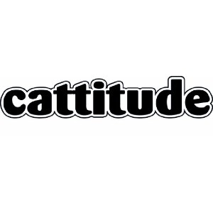 Imagine This Cattitude Car Magnet, 7-Inch by 2-Inch by Imagine This