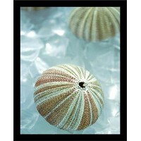 【Buyartforless Framed Seaglass 4 ( Sea Urchin ) by Alan Blaustein写真アートプリントポスター壁装飾、14 x 11 】...