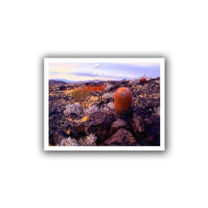 ArtWall Dean Uhlinger ' In The Mojave ' Unwrappedキャンバスアートワーク 24x32 0uhl110a2432r