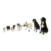 Pawz Dog Boots - Large - Black,12 pack by Pawz [並行輸入品]