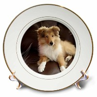 犬Rough Collie – Rough Collie Puppy – プレート 8 inch Porcelain Plate cp_4546_1