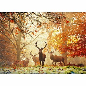 HEYE Puzzle・ヘイパズル 29805 Magic Forests : Stags 1000ピース