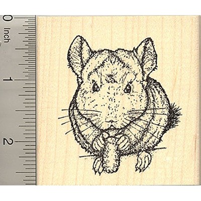 Chinchilla Rubber Stamp, Realistic Pet with Treat