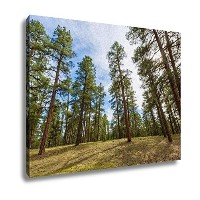 """Ashleyキャンバス、ツリーPine Forest in Grand Canyon Arizona 20"""" x 25"""" 6368896-AG-C1-2025"""