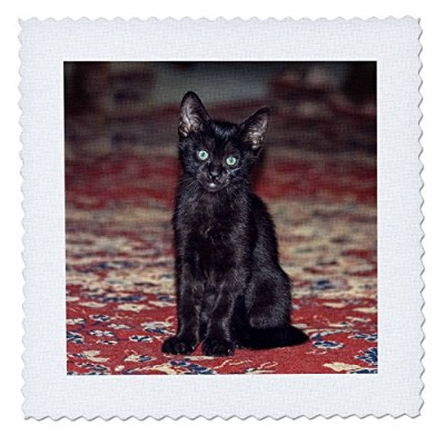 3drose Danita Delimont – Cats – CuriousブラックKitten – キルト正方形 20x20 inch quilt square qs_278672_8