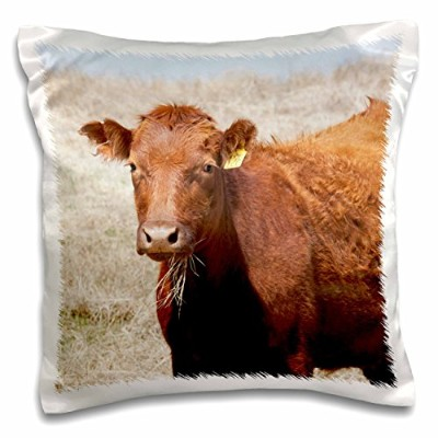 3drose Danita Delimont–Cows–赤Angus Cow with Grass in Mouth–na02pwo0000–PiperAnneウースター–...
