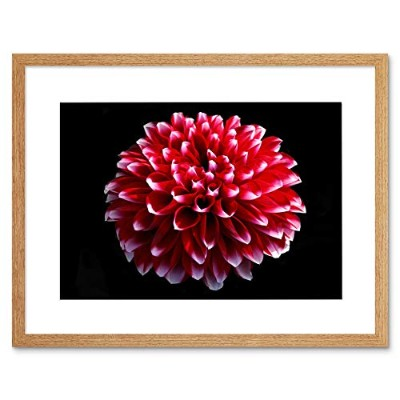 Single Dahlia Pink Red Flower Bloom Picture Framed Wall Art Print ピンク花咲く画像壁