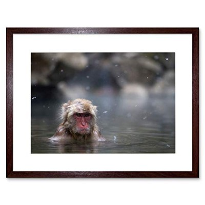 Animal Photo Monkey Japanese Macaque Framed Wall Art Print 動物写真モンキー日本人壁