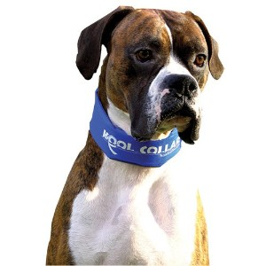 Kool Collars for Dogs Red Large by Kool Collars