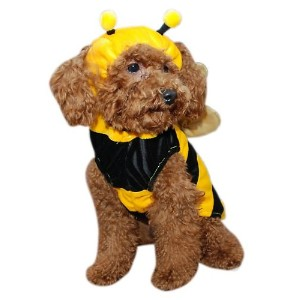 Anit Accessories AP1015-S Bumble Bee Pet Costume Size Small
