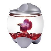 Tetra 0.7 Gallon Betta Bubble kit with Changing Color LED Hood by AquaTech