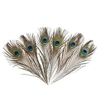 Hgshow 50 Pcs High quality peacock eye feather 10-12 Natural by Hgshow