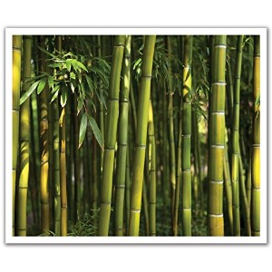 JP London POSLT2012 uStrip Lite Removable Wall Decal Sticker Mural Bamboo Forest Green, 24-Inch x...
