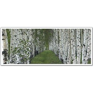 JP London PAN5260 uStrip Path Between Line Of Birch Trees High Resolution Peel Stick Removable Wallpaper Sticker Mural, 48' Wide by 19.75' High [並行輸入品]