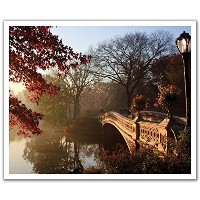 JP London POSLT2206 uStrip Lite Removable Wall Decal Sticker Mural Central Park Forest Pond Bridge...