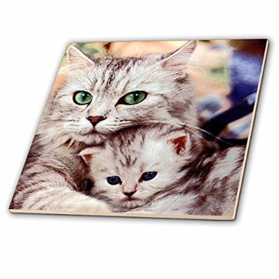 Cats–Cats–タイル 8-Inch-Glass ct_304_7