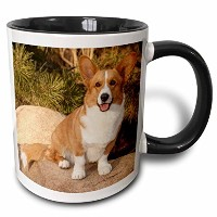 3drose Danita Delimont – 犬 – Purebred Cardigan Welsh Corgi Dog on Rock – na02 pwo0023 – PiperAnneウース...