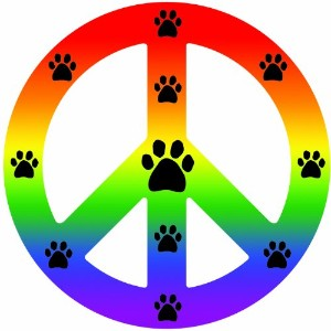 Imagine This Peace Car Magnet Sign, Rainbow, 41/2-Inch by 4-1/2-Inch by Imagine This