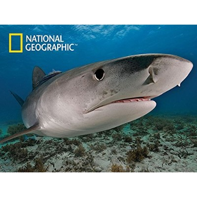 National Geographic 500 piece 3D Puzzle Jigsaw Ocean Tiger Shark 10026