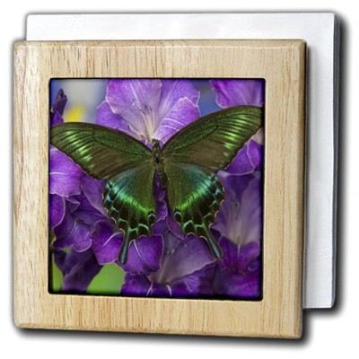 """3drose Danita Delimont – Butterflies – The共通Peacock Swallowtail Butterfly – タイルナプキンホルダー 6"""" nh..."""