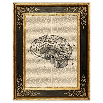 Dreamery Studio, Human Brain Medical Illustration Art Print on Upcycled Antique Book Page, 8x10.5...