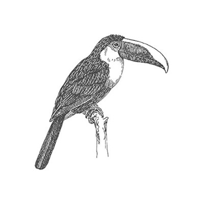 Toucan、pre-inked動物ゴム製スタンプ( # 440115) Stamp size (30x30mm) パープル